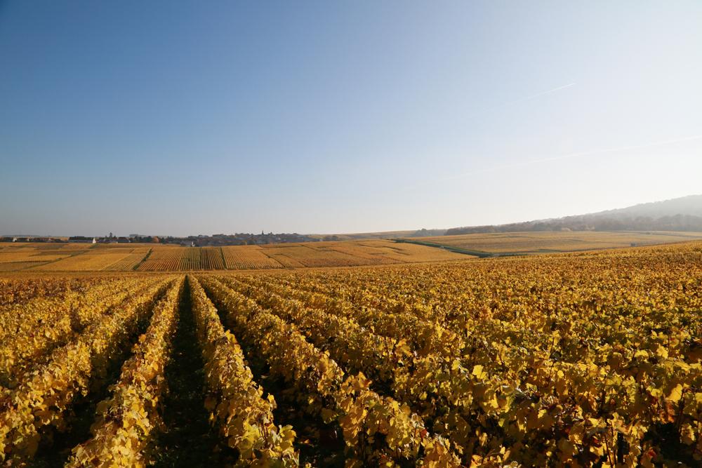 La vie au Domaine Roger Lustig - Viticulture Responsable