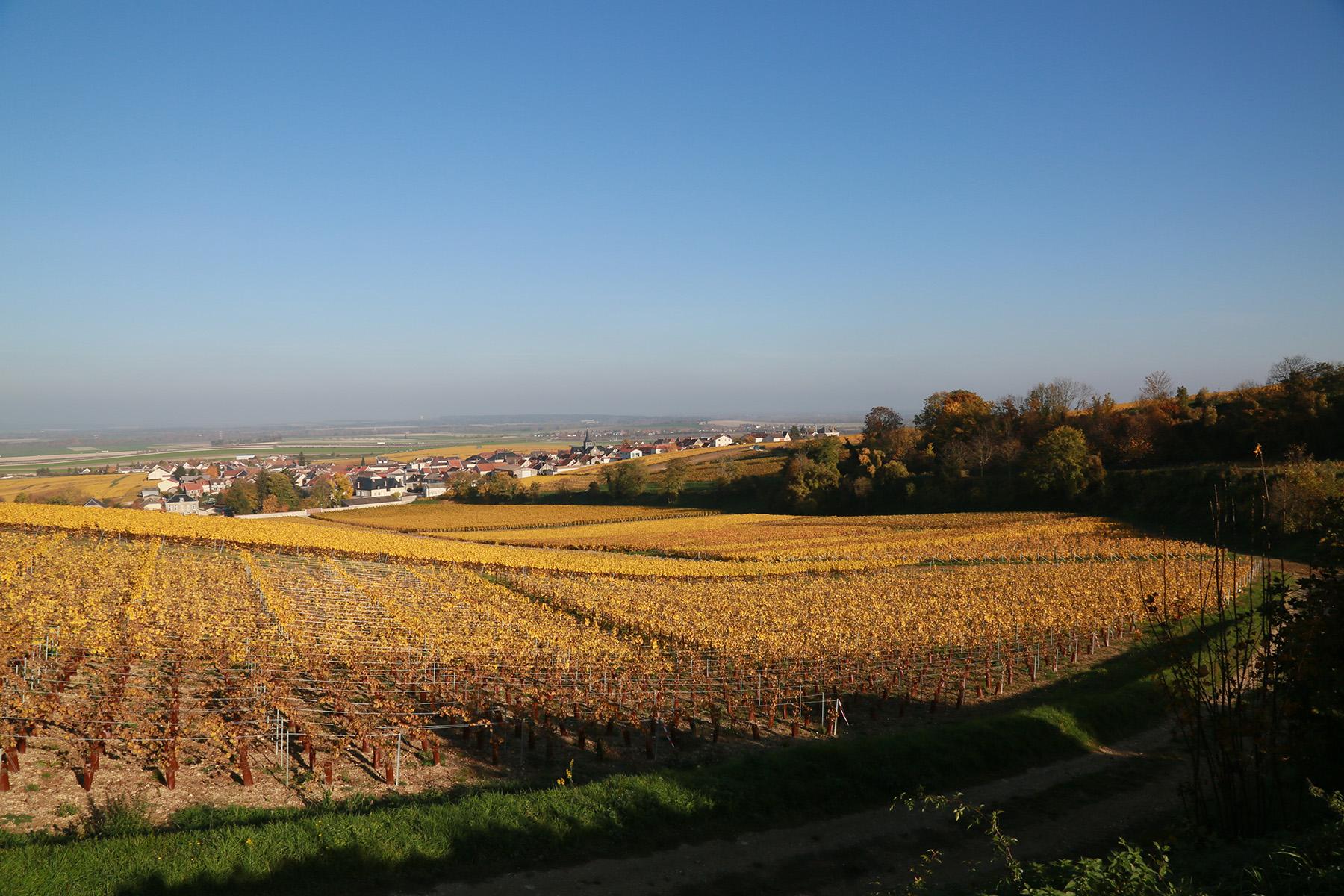 La vie au Domaine Roger Lustig - le Territoire du Vignoble